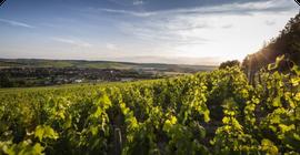 Références de site - Domaine du chardonnay.